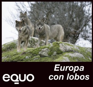 140130-lobos